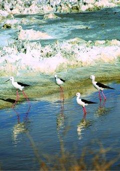 Foto entorno natural de Chiclana